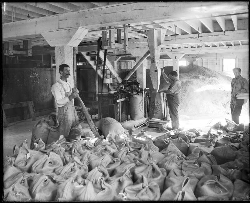 Workers Weighing And Sacking Sugar At The Pacific Sugar Companyc Visaliac Tulare Countyc Californiac Ca