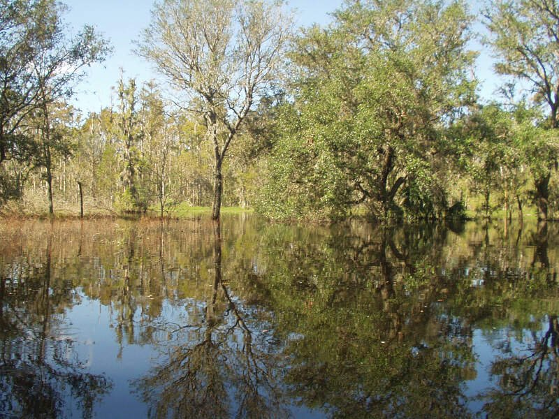 Kissengen Spring Flooded From Peace River Backflow After Hurricanes Passed Through The Areac Octoberc