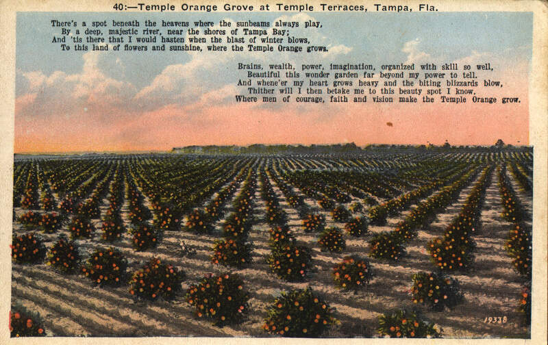 Temple Orange Grove