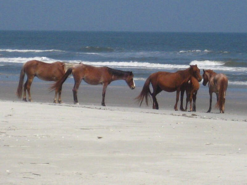 Horse Herd At The Beach