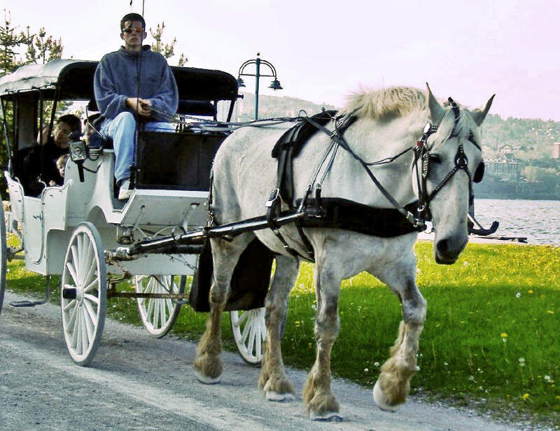 Horse And Carriage Duluth