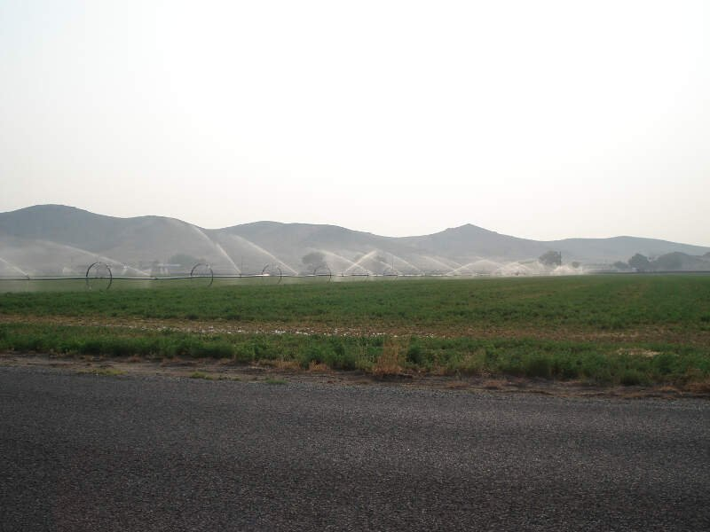 Watering Alfalfa Field