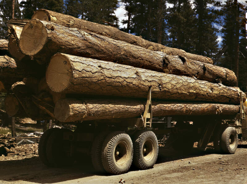 Truck Load Of Ponderosa Pinec Edward Hines Lumber Coc Operations In Malheur National Forestc Grant Countyc Oregonc July