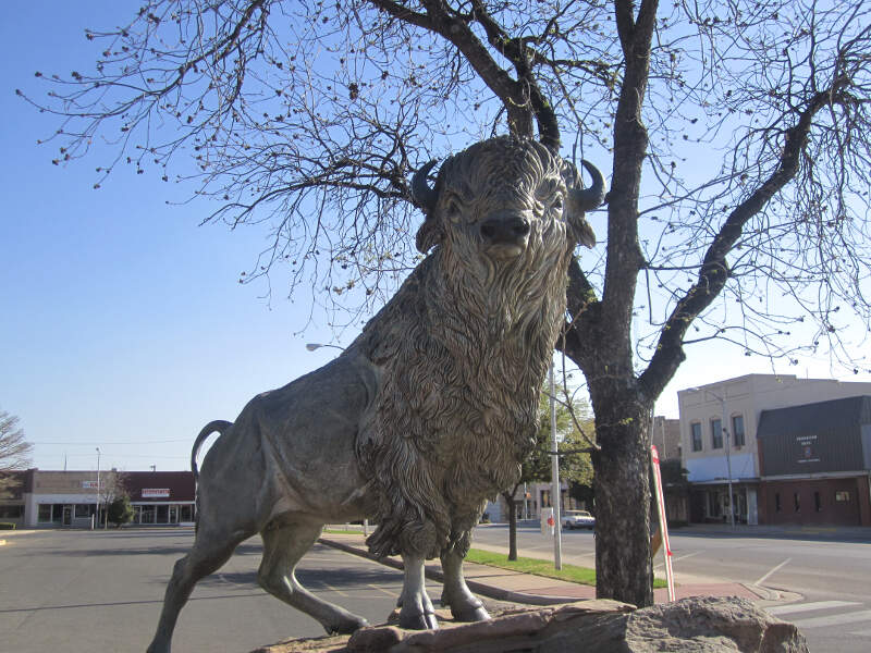 Revised White Buffalo In Snyderc Tx Img